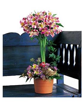 Alstroemeria Topiary Floral Arrangement