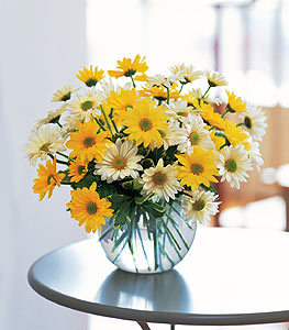 Daisy Bubble Bowl Floral Arrangement
