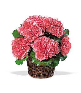 Carnation Expression Floral Arrangements