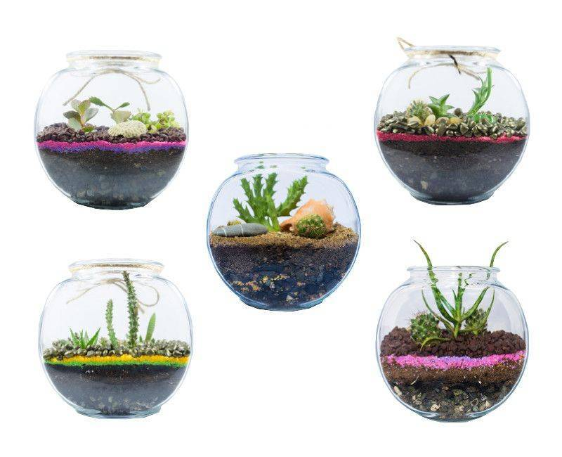 Little Oasis Little Cayman Container Gardens